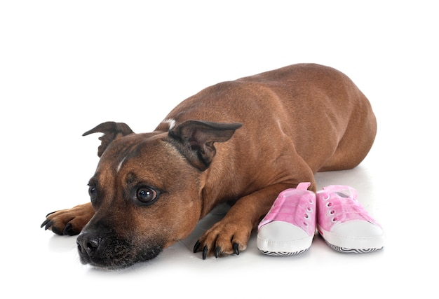 Chinelos para cães e bebês Foto Premium
