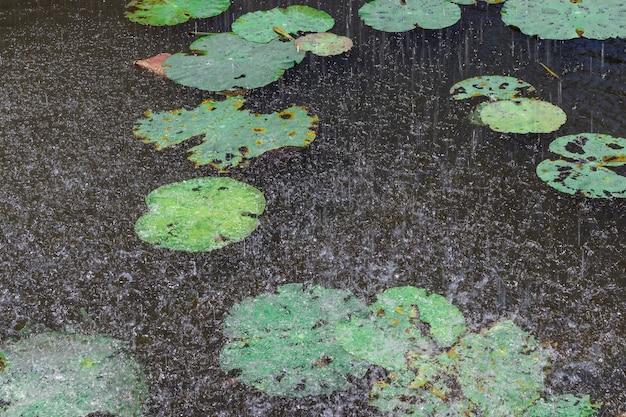 Chovendo gota na lagoa de água Foto Premium