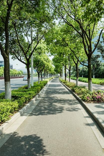 Ciclovia com árvores Foto gratuita