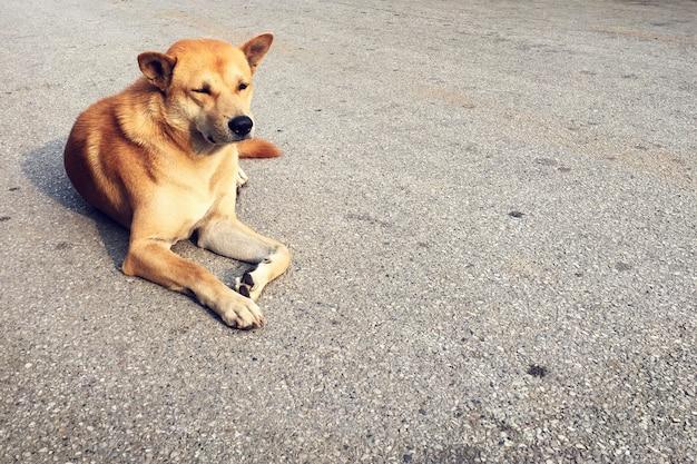 Cão vira lata deitado no chão cão ideal