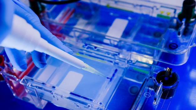 Cientista conduzindo o processo biológico de eletroforese em gel como parte da pesquisa Foto gratuita