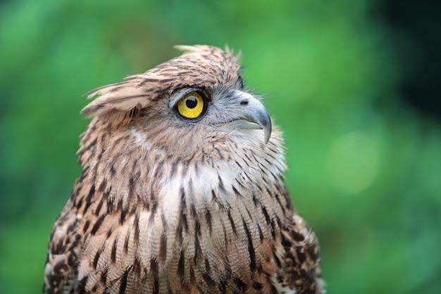 Cima, coruja águia, em, natureza Foto Premium