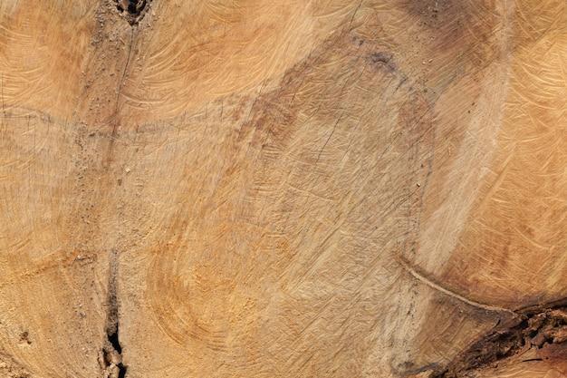 Cima, de, antigas, madeira, corte, textura Foto Premium