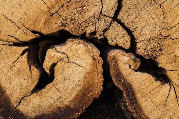 Cima, de, corte, tronco árvore Foto Premium