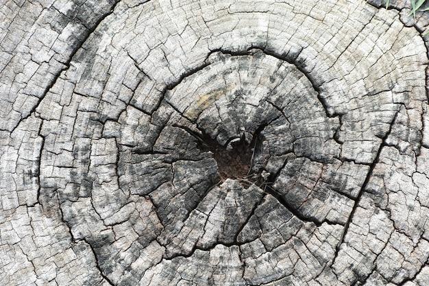 Cima, madeira, stump redondo, corte, árvore, com, anual, anéis, como, um, madeira, textura Foto Premium