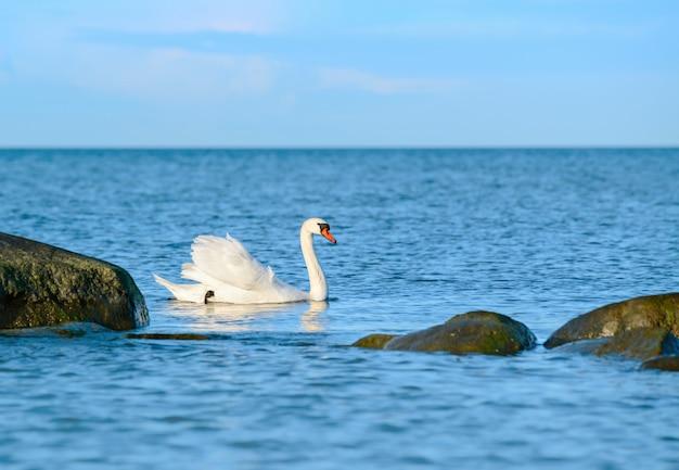 Cisne branco nadando no mar Foto Premium