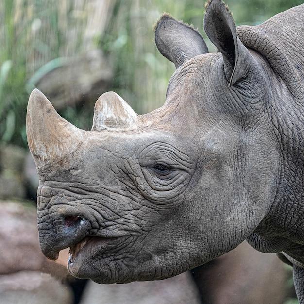 Close da cabeça de um rinoceronte durante o dia Foto gratuita