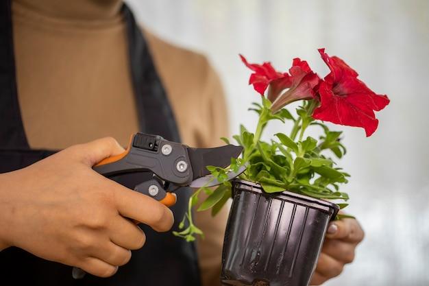 Close das mãos de uma jovem podando ervas daninhas enquanto planta flores em um vaso Foto Premium
