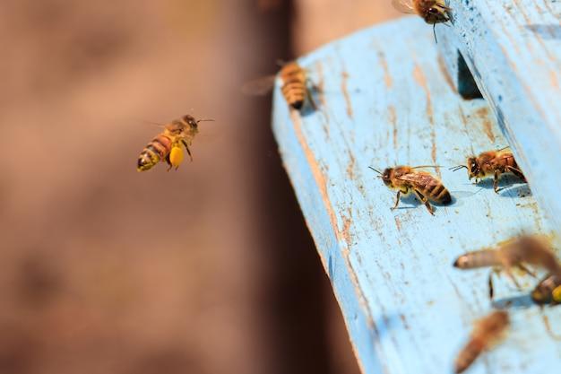 Close de abelhas voando em uma superfície de madeira pintada de azul sob a luz do sol durante o dia Foto gratuita