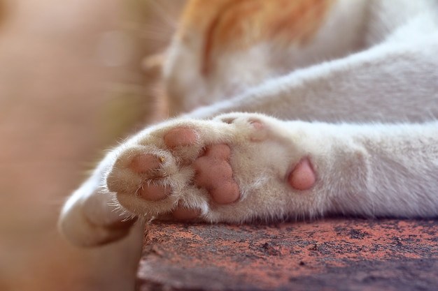 Close de gato de patas Foto Premium