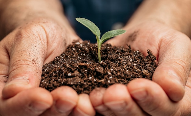 Close de mãos masculinas segurando o solo e uma plantinha Foto gratuita