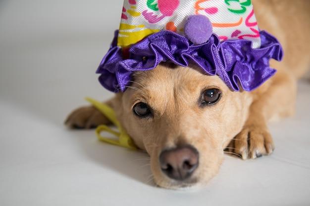 Close de um cachorro fofo com um chapéu de aniversário olhando para a câmera Foto gratuita