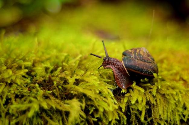 Close de um caracol marrom em uma concha rastejando na grama Foto gratuita