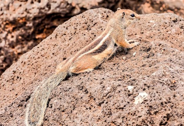 Close de um esquilo fofo em uma rocha enorme Foto gratuita