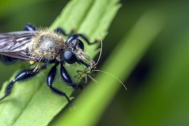 Close de um inseto em uma folha verde Foto gratuita