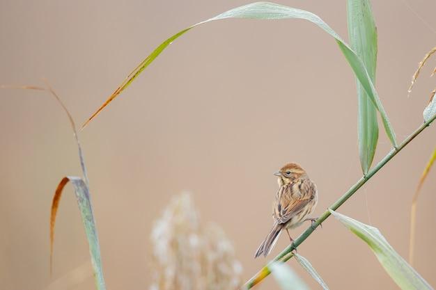 Close de um pardal empoleirado na grama contra um fundo desfocado Foto gratuita