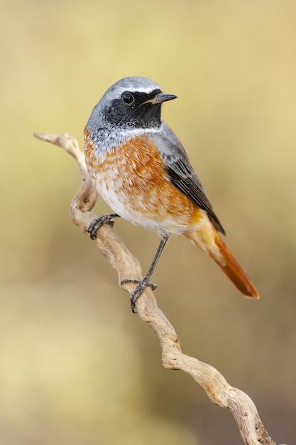 Close de um pássaro silvestre empoleirado em um galho com um fundo desfocado Foto gratuita