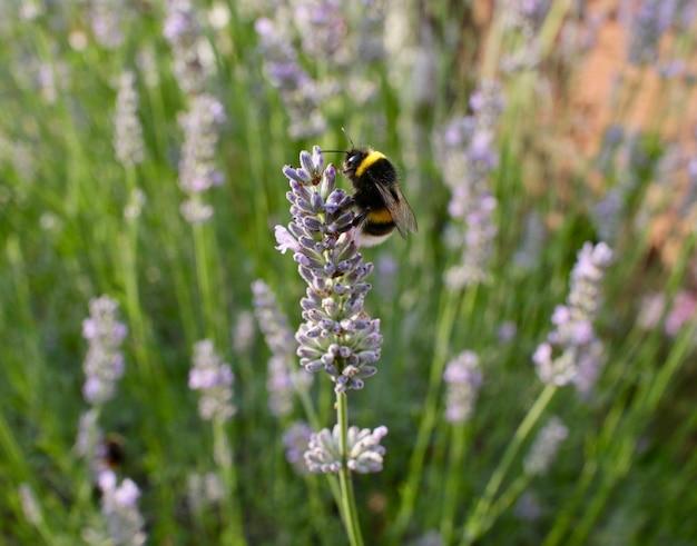 Close de uma abelha colhendo néctar de uma flor Foto gratuita