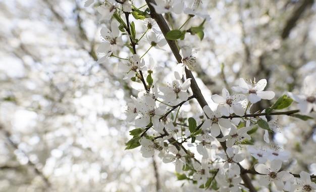Close de uma árvore de flor branca com um natural turva Foto gratuita