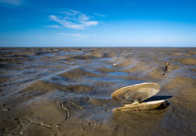 Close de uma concha na lama e um céu azul Foto gratuita