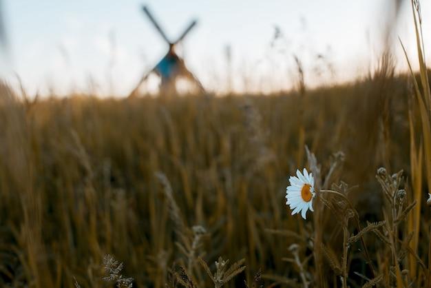 Close de uma flor branca em um campo gramado com um homem desfocado carregando uma cruz no fundo Foto gratuita