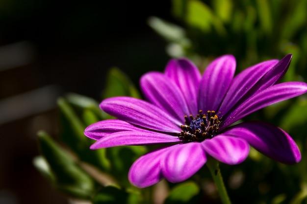Close de uma flor roxa crescendo na grama Foto gratuita