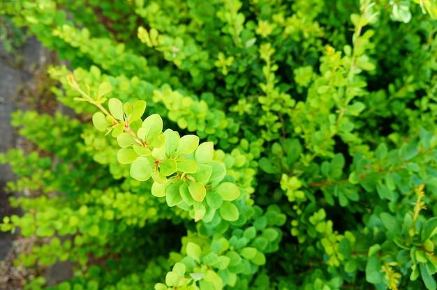 Close de uma planta com folhas verdes - ótimo para um plano de fundo Foto gratuita