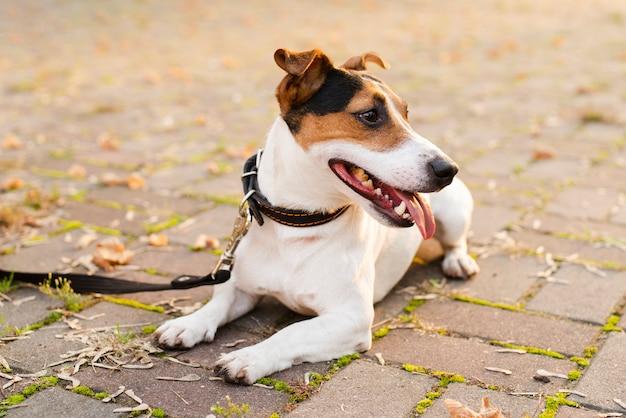 Close-up adorável cachorrinho ao ar livre Foto gratuita
