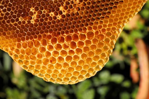 Close-up amarelo lindo favo de mel com mel Foto Premium