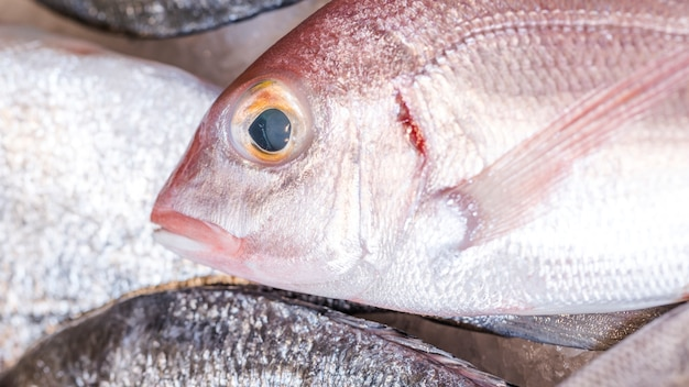 Close-up, congelado, peixe, mercado Foto gratuita