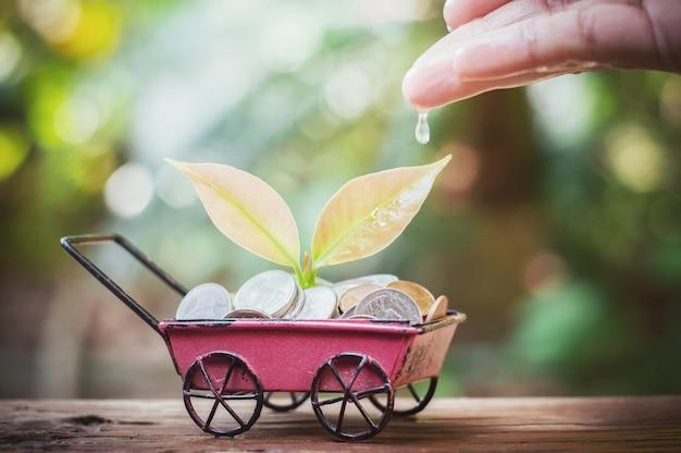 Close-up da mão da mulher nutrir e regar uma planta jovem Foto Premium