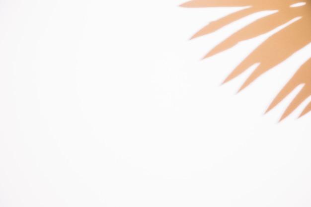 Close-up da sombra da folha no canto do fundo branco Foto gratuita