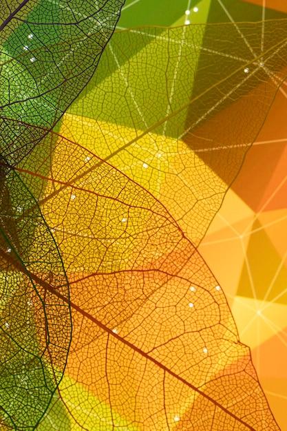Close-up, de, abstratos, outono, folha Foto gratuita