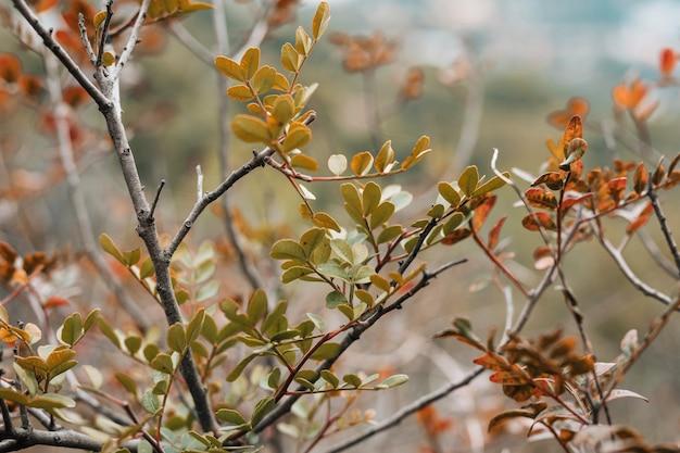 Close-up, de, árvore sai, em, a, floresta Foto gratuita