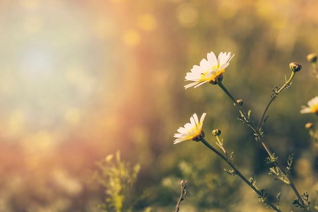 Close-up, de, branca, flores desabrochando Foto Premium