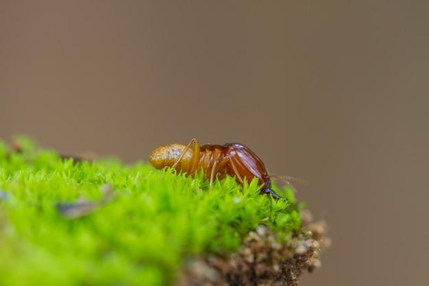 Close up de cupins ou formigas brancas destruídas Foto Premium