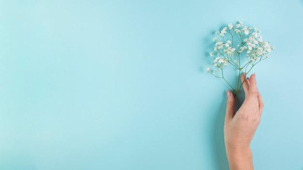 Close-up, de, femininas, mão, segurando, branca, gypsophila, em, mão, contra, experiência azul Foto gratuita