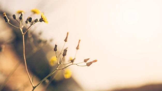 Close-up, de, flor amarela, com, broto Foto gratuita