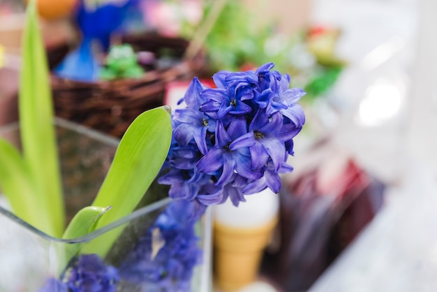 Close-up, de, flor jacinto, planta, em, a, vidro Foto gratuita