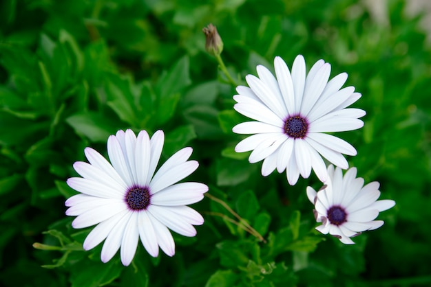 Close-up de flores brancas Foto Premium
