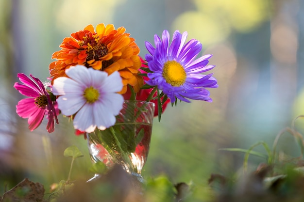 Close-up de flores de campo multicolorido brilhante lindo outono Foto Premium