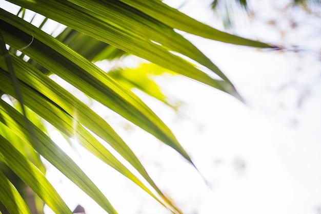Close-up, de, folha palma, em, luz solar Foto gratuita