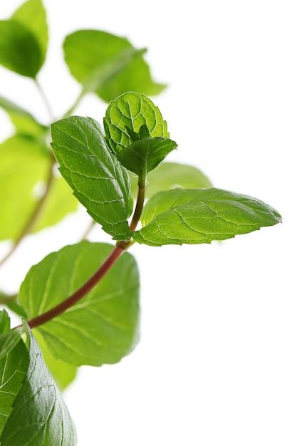 Close-up de folhas de hortelã Foto gratuita