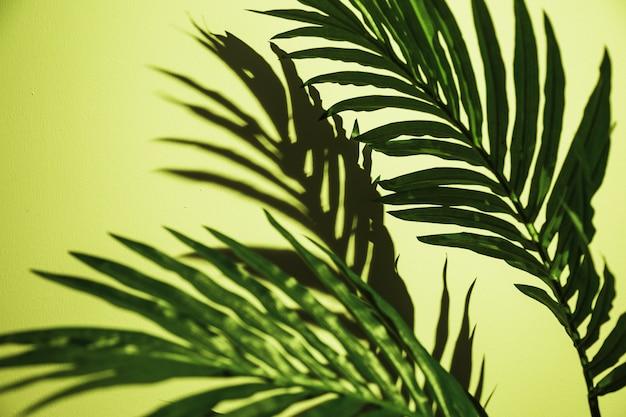 Close-up de folhas de palmeira verde no pano de fundo verde hortelã Foto gratuita