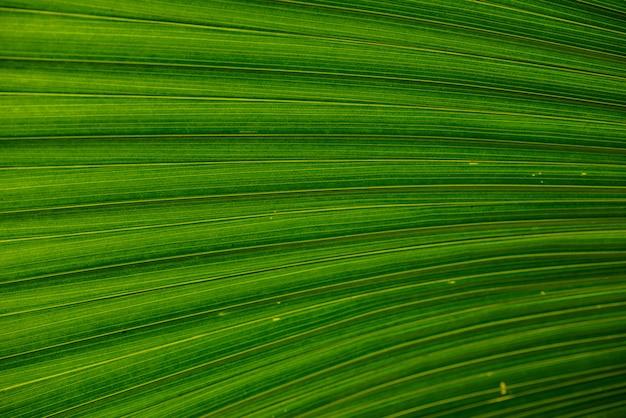 Close-up de folhas textura ou superfície Foto Premium