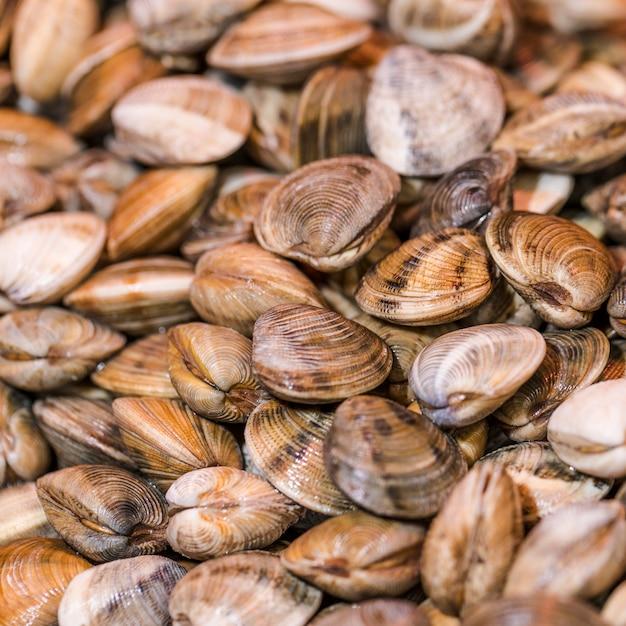 Close-up, de, fresco, moluscos, em, loja Foto gratuita