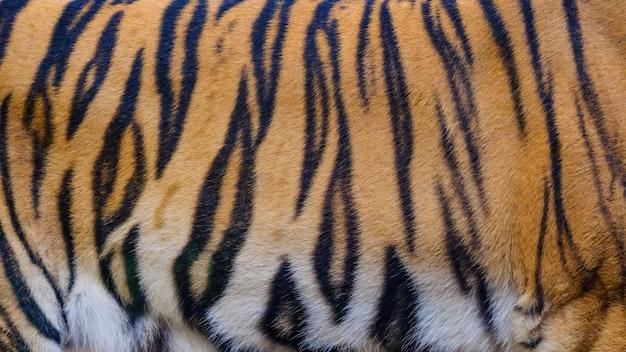 Close-up de fundo de textura de pele de tigre Foto Premium
