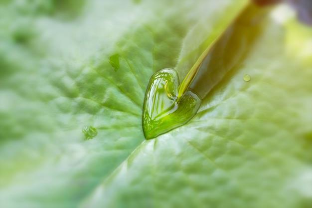 Close up de gotas de água de forma de coração na folha com luz solar Foto Premium