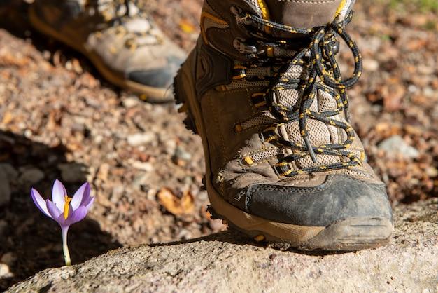 Close-up, de, hiker, foots, em, a, montanha, com, flor Foto Premium