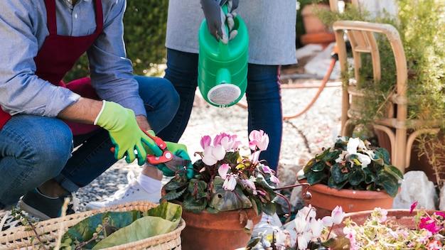 Close-up, de, macho fêmea, gardener, águas, e, trims, a, bush, com, secateurs, em, jardim Foto gratuita